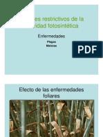 Fotosintesis IV