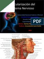 Vascularizacion Del Snc.