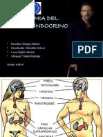 Anatomia de Endocrino