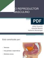 APARATO REPRODUCTOR MASCULINO (1) (2) (1)