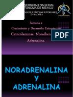 Adrenalina y Noradrenalina Kompleta