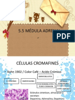 5-5medulaadrenal-091127181100-phpapp02