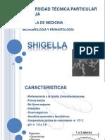 Shigella