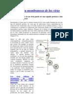 Envoltura Membranosa de Los Virus