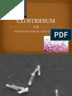 Clostridium Exposicion