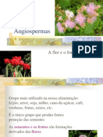 Angiospermas 2 Ano