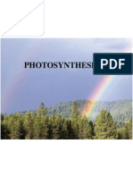 photosynthesis 2012