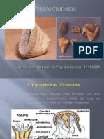 phyllum_Cnidaria