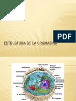 Estructura de La Cromatina