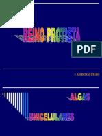 Algas Unicelulares 23.08.11