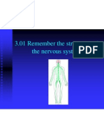 3 01 remember the structures of the nervous system
