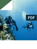 182-197_Fünf vor Zwölf – verschwinden die Riffe?