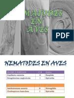 Nematodes en Aves (1)
