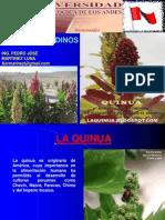 Cultivos Andinos Clase 12 Quinua