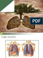 Pulmones 2