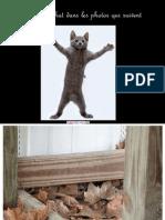 L11 Palu Cherchez Le Chat