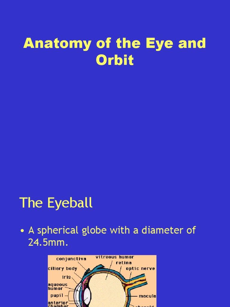 Anatomy of the Eye and Orbit | Cornea | Human Eye