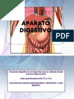 Anatomia Del Aparato Digestivo IiL