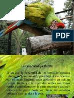 La Guacamaya Verde