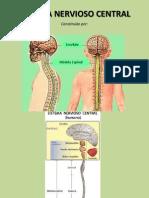 Sistema Nervioso Central_parte 1
