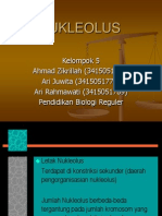 16543906-NUKLEOLUS