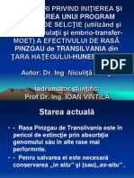 Prezentare - Mang Niculita
