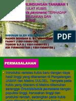 Presentasi No_2_9_Pengaruh Ulat Kubis (Crocidolomia Pavonana) Terhadap Tingkat Kerusakan Dan Produksi Kubis