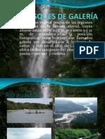 BOSQUES DE GALERÍA