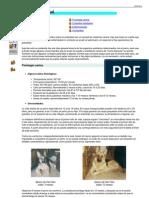La Salud Del Perro.gral+