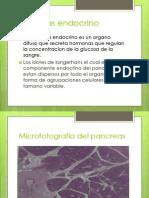 Pancreas Endocrino Histo Expo