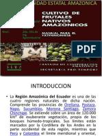 Frutos Amazonicas