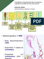 AULA 5_Ácidos Nucleicos