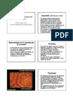 20 - Fisiologia de La Reproduccion en El Macho