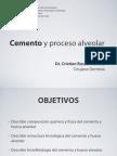 Cemento y Hueso Alveolar 2012