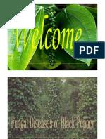 Black Pepper - Fungal Diseases