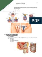 Anatomia - Sistema Genital