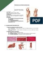 Anatomia - Sistema Muscular