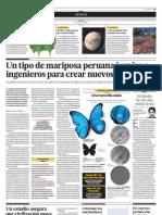 Un tipo de mariposa peruana inspira a ingenieros para crear nuevos materiales