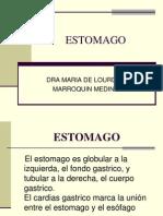 estomago-101022013601-phpapp01