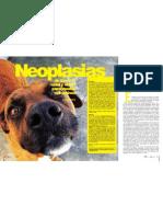 Neoplasias de Cavidad nasal y senos paranasales en caninos