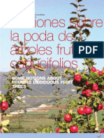 Nociones sobre la poda de árboles frutales caducifolios