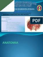 Anatomia y Fisiologia PISO PELVICO
