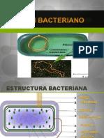 Adn Bacteriano