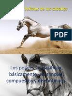 Capas y Señales de los caballos