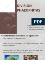 Expo Phaeophitas