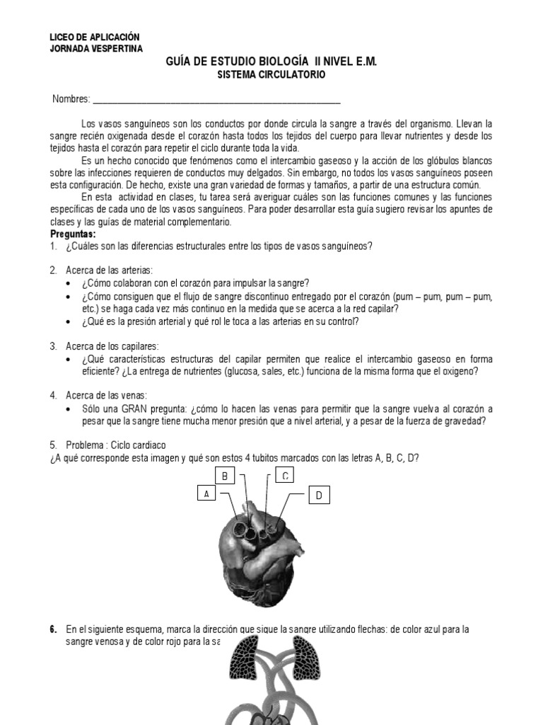 Guia Sistema Circulatorio