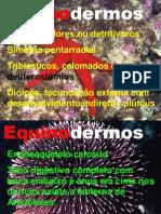 8 Equinodermos
