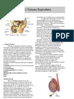 Anatomia - Apostila - Sistema Reprodutor