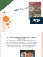 Enfermedades Del Cuy