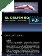 Delfín+Ro..